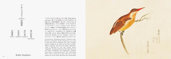 鳥たちを和の視点で紹介、「美し、をかし、和名由来の江戸鳥図鑑」刊行…パイ インターナショナル 4枚目の写真・画像