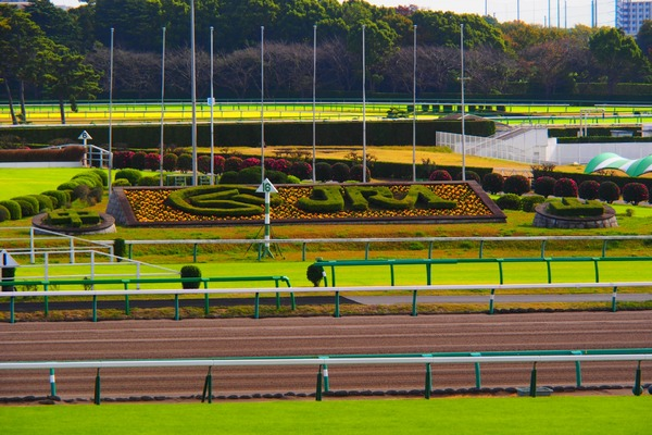 日本中央競馬(JRA)を引退する馬は毎年5000頭を超える