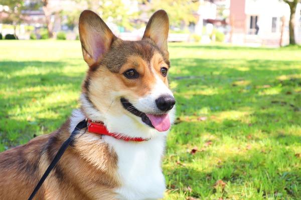 水害後は衛生面に注意…ペットも人も感染症の予防を   動物のリアルを伝えるWebメディア「REANIMAL」