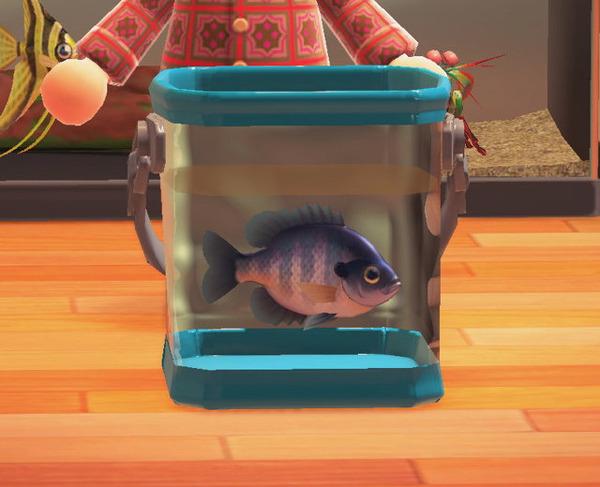 あつ 森 釣れる 魚