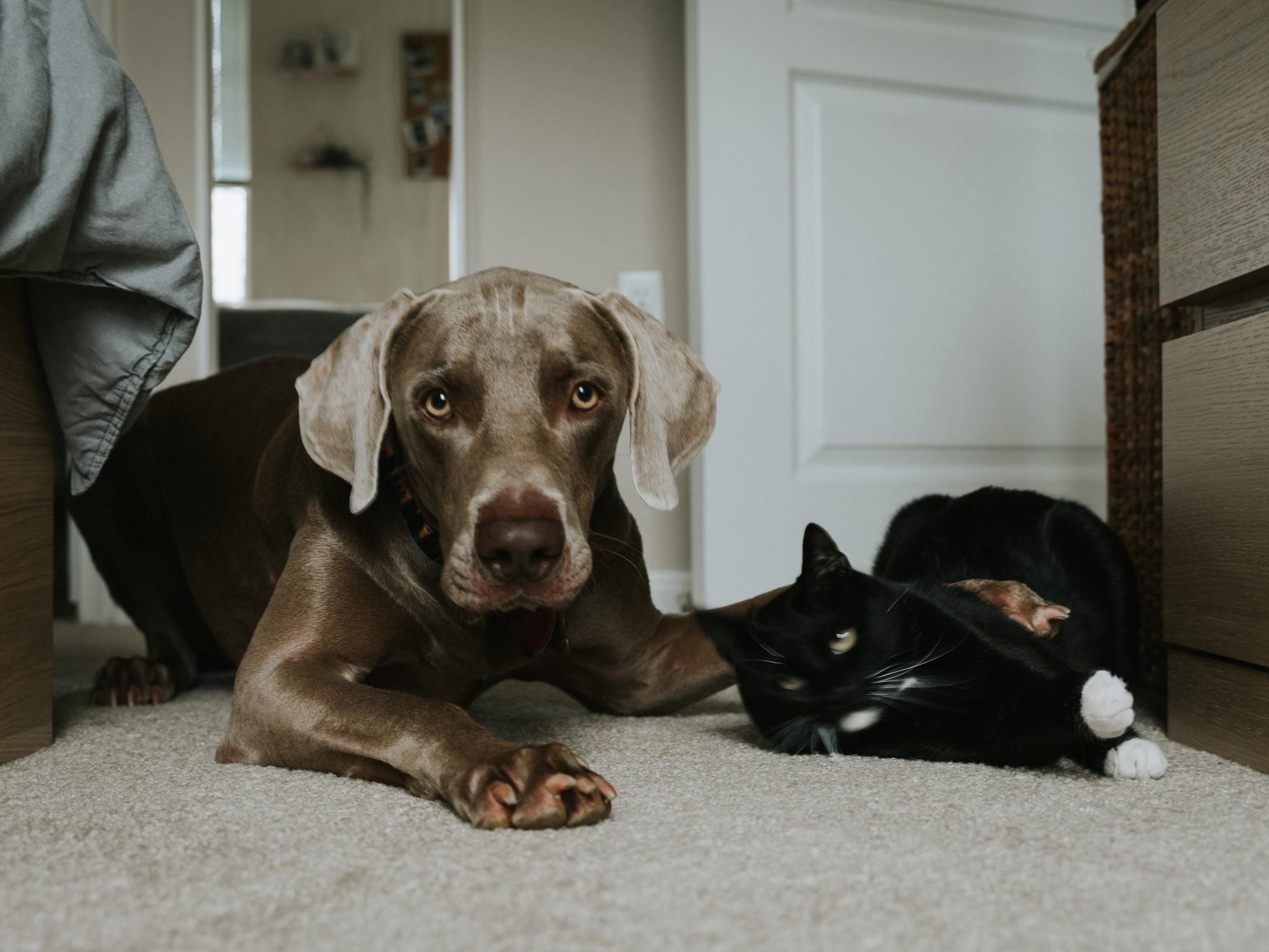 犬 から うつる 病気
