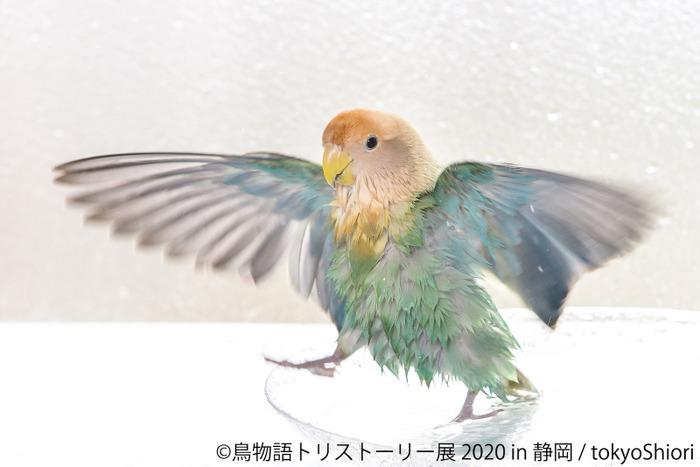 美しい鳥の合同写真展&物販展「鳥物語トリストーリー展 2020 in 静岡 ...