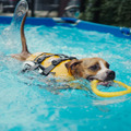 DOGGY BRO、「DOG POOL PARTY」を開催
