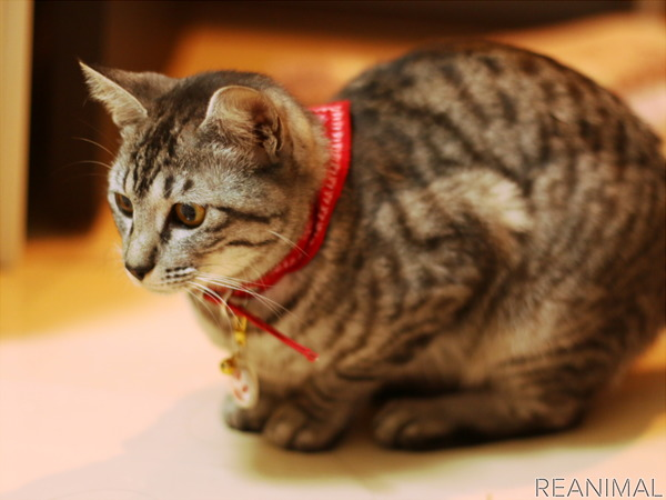 保護猫、あの日の約束…里親になる決意と猫との生活 | 動物のリアルを ...