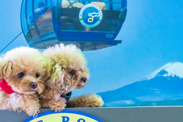 愛犬も一緒に乗れるロープウェイ