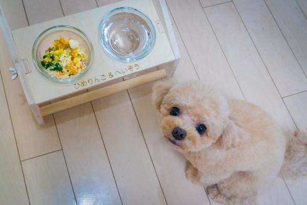 新鮮な食材は愛犬たちに好評
