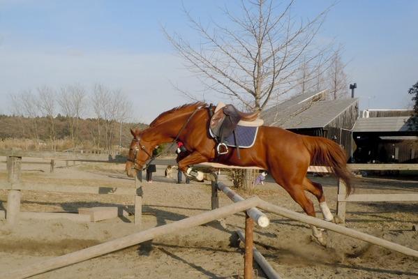 競走馬から様々な第二の「馬生」へ
