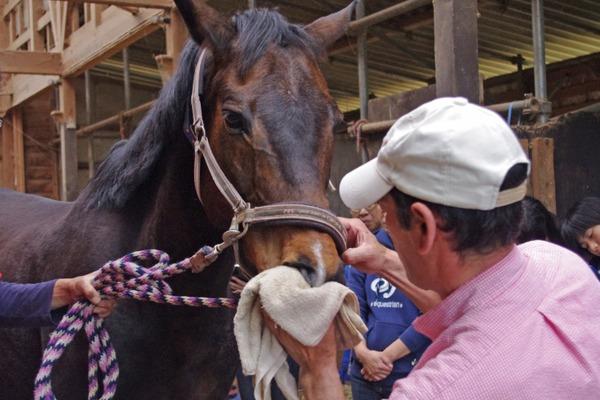 プロから馬のお手入れ方法を学ぶ