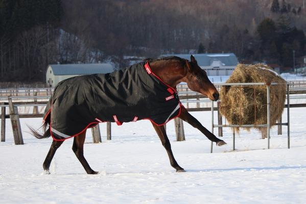 引退競走馬の福祉向上に向けて