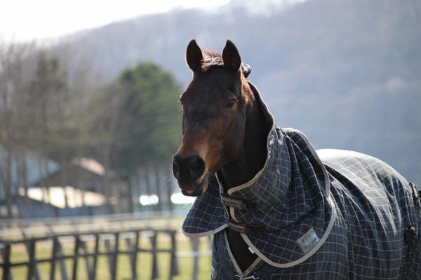 沼田代表は「馬のいる風景」が好きだと語る