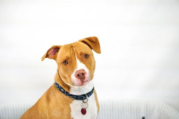 見た目の特徴だけで「危険な犬種」と判断される(写真はイメージ)