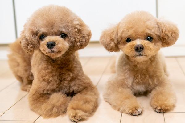 小型犬と暮らすといくらぐらいかかるの?