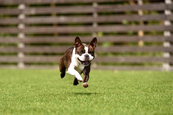 健康な両親から生まれた元気な犬を迎えることが犬自身と飼い主の幸せに