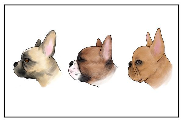短頭犬種の頭蓋骨は扁平に「創られ」、呼吸器や眼球を収めるスペースが不足している