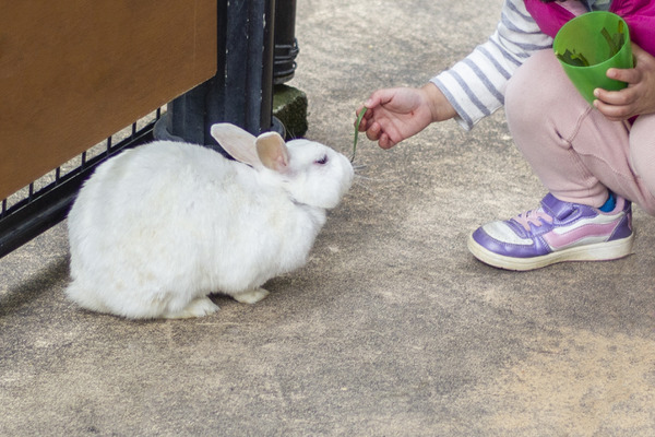 ウサギの飼い主は、動物園等で他のウサギと触れ合った後で手洗いに努めたい