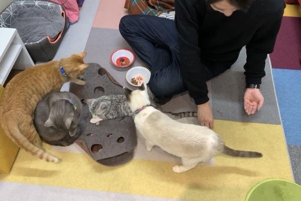 保護猫カフェにて