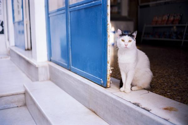 猫(イメージ)