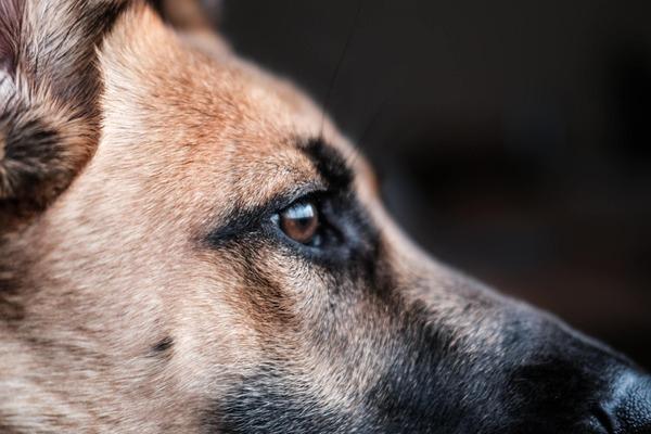 犬(イメージ)