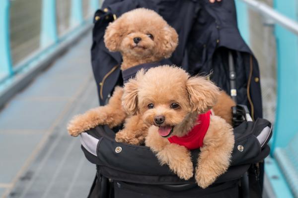カートに乗せれば愛犬と一緒でOK