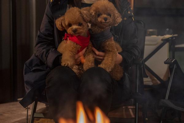 愛犬と眺める焚火