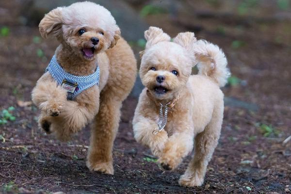 愛犬たちの健康のために