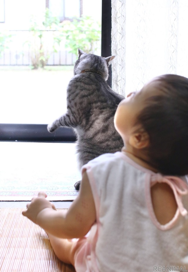 娘も気になってしまう猫じゃらし