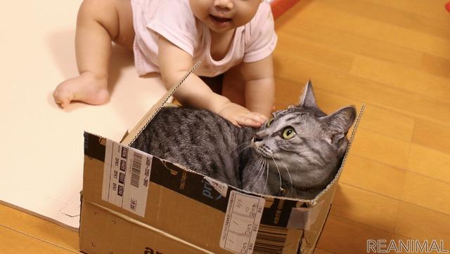 箱に入っている猫が気になって仕方がない娘