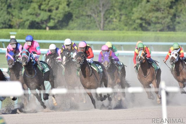 競馬で活躍する馬たちの多くは3歳前後という