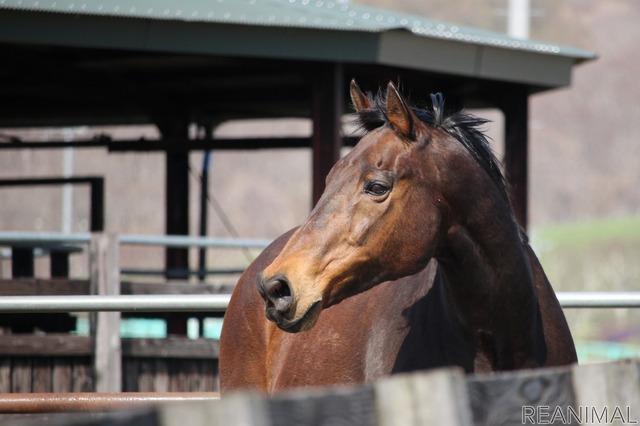 ナイスネイチャがきっかけで引退馬を知る人も増えた
