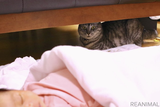 娘が寝ているときも近くで観察しています