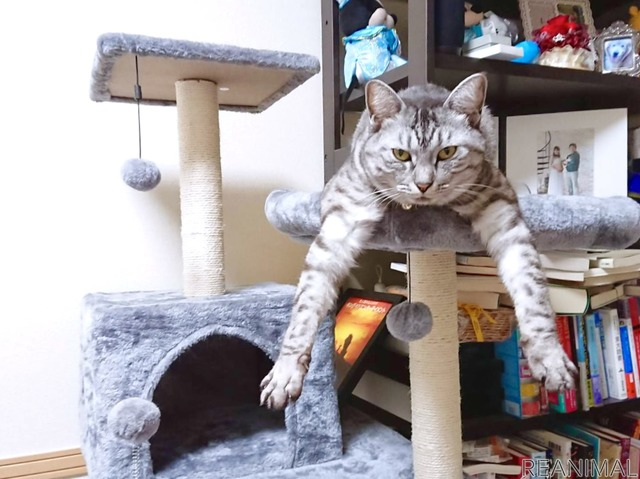 大人が見ていないところで嘔吐した猫。ストレス対策を本格的に考えることに