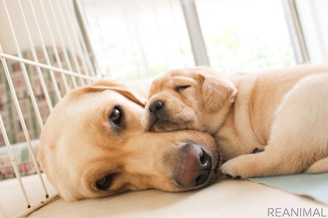子犬は母犬から免疫と社会性を学ぶ