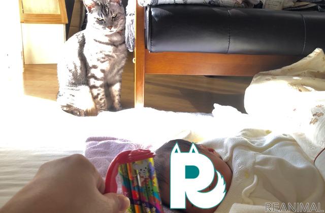 娘をあやすといつのまにか猫も夢中に