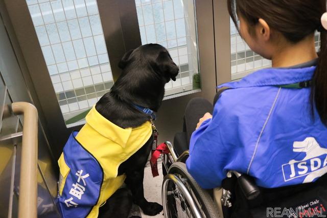 介助犬は黄色のベストに「介助犬」の文字が目印