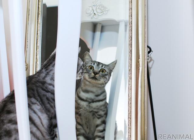 こちらを見ていないようで、しっかり見ているツンデレ猫
