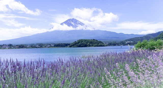 河口湖畔の大石公園からは富士山がバッチリ