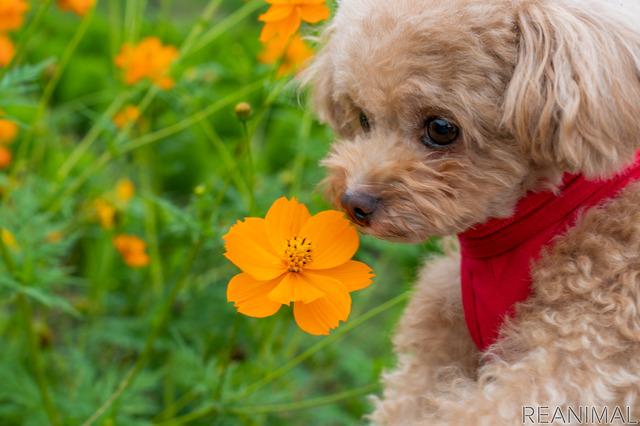 花を愛でる(?)ひめりんご