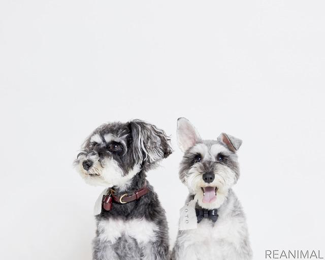 犬の魅力に「ハマる」きっかけとなったシュナウザー