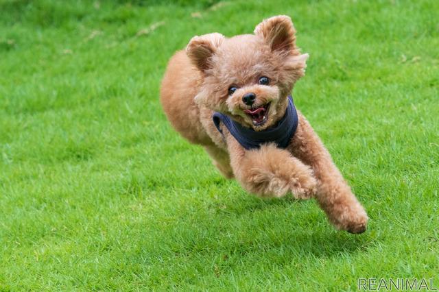愛犬たちの健康と幸せのために
